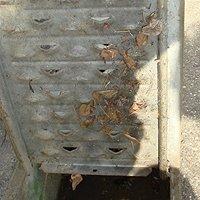 奈良県広陵町の住宅前側溝 セアカゴケグモの巣