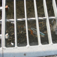 セアカゴケグモの巣 写真