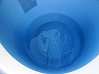 デミリン発泡錠1% 使用方法6 [害虫退治、駆除、対策、ハエ(蠅)、チョウバエ、ユスリカ、蚊、小さい虫、幼虫、発生源対策、風呂、水路、汚水、河川、池、水たまり]