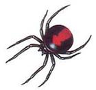 クモの巣消滅ジェット セアカコケグモにもよく効く! [害虫駆除、退治、対策、クモ(蜘蛛)、クモの巣]